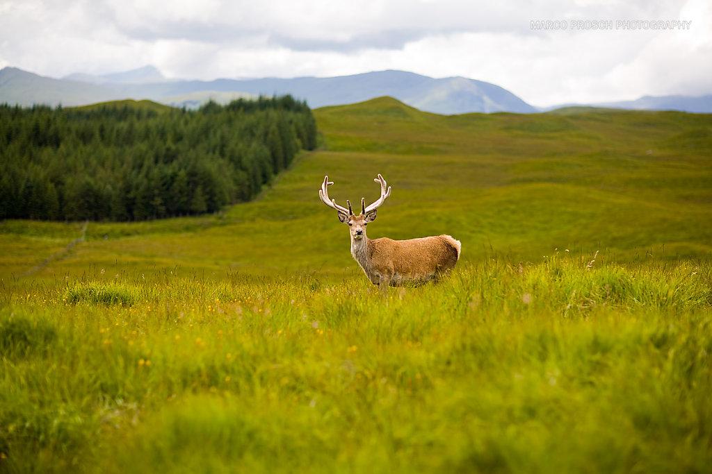 Scotland-01-MarcoProsch.jpg